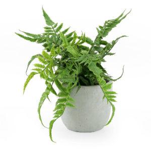 Faux green fern in a grey cement pot.